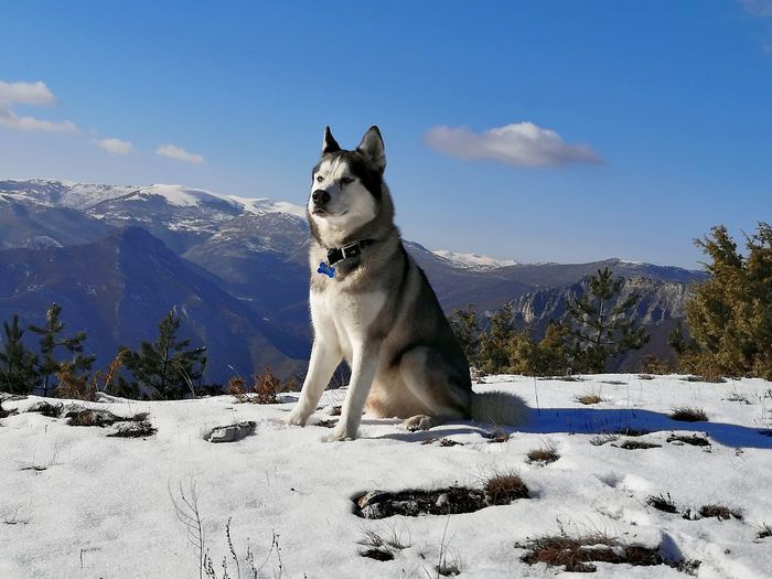 Dog standing on snow covered mountain against sky