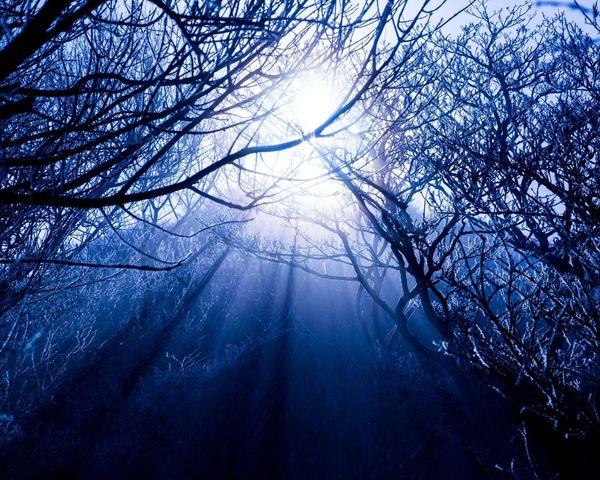 風景 霧氷 樹氷 Soft Light Softrime Landscape Nature Winter