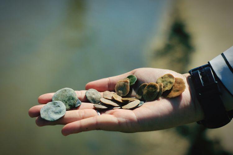Close-up of human hand holding pebbles at beach