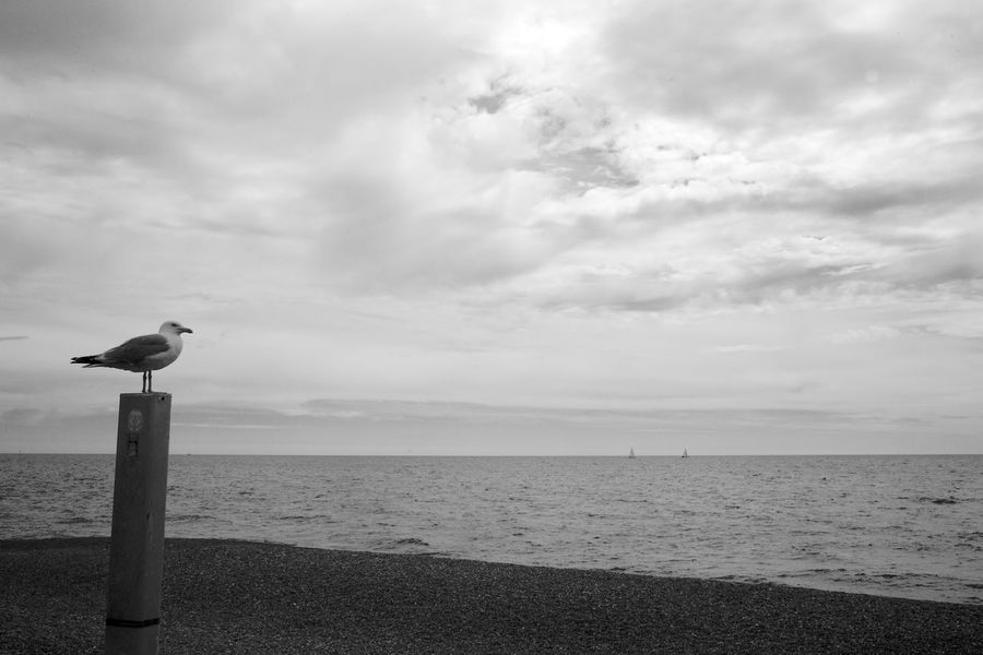 Contemplating Seagull Black & White Animal Themes Animal Wildlife Animals In The Wild Beach Beauty In Nature Bird Blackandwhite Cloud - Sky Day Horizon Over Water Nature No People One Animal Outdoors Perching Scenics Sea Seagull Sky Tranquil Scene Tranquility Water