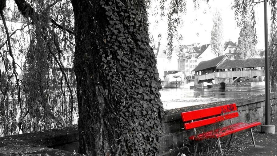 Tree Tree Trunk No People Day Outdoors Sky Red Contrast Beauty In Nature Autumn Tranquility Seating Relaxing Water Luzern Black And Red Loneliness City Streetphotography Urban