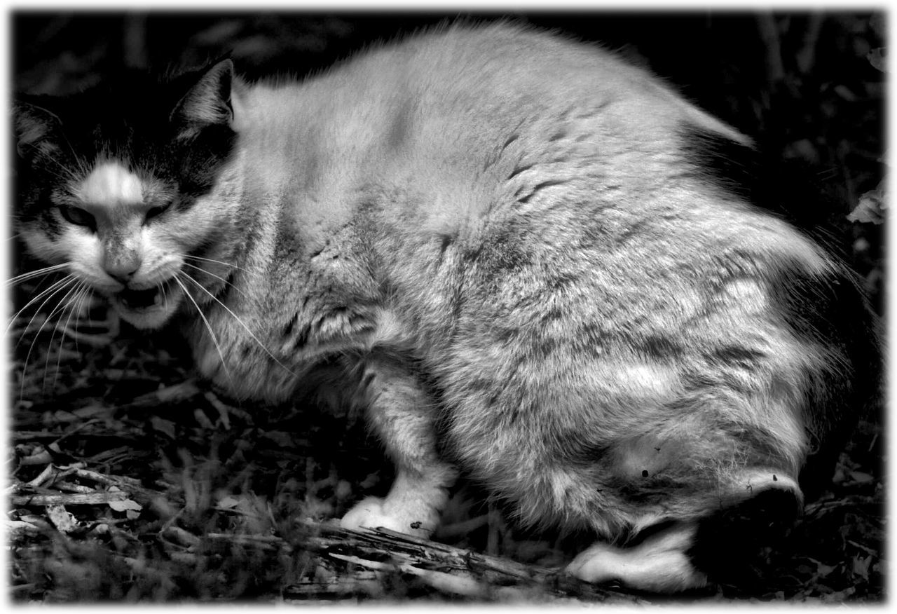 animal themes, domestic cat, one animal, mammal, cat, domestic animals, feline, pets, relaxation, no people, day, animals in the wild, outdoors, close-up