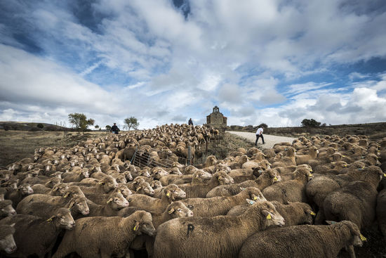 Countryside lifestyle in the province of Soria SPAIN Soria Animal Beauty In Nature Cloud - Sky Countryside Day Domestic Animals Fields Flock Of Sheep Landscape Large Group Of Animals Lifestyles Livestock Mammal Men Nature Outdoors People Real People Sheep Sheeps Sky Togetherness