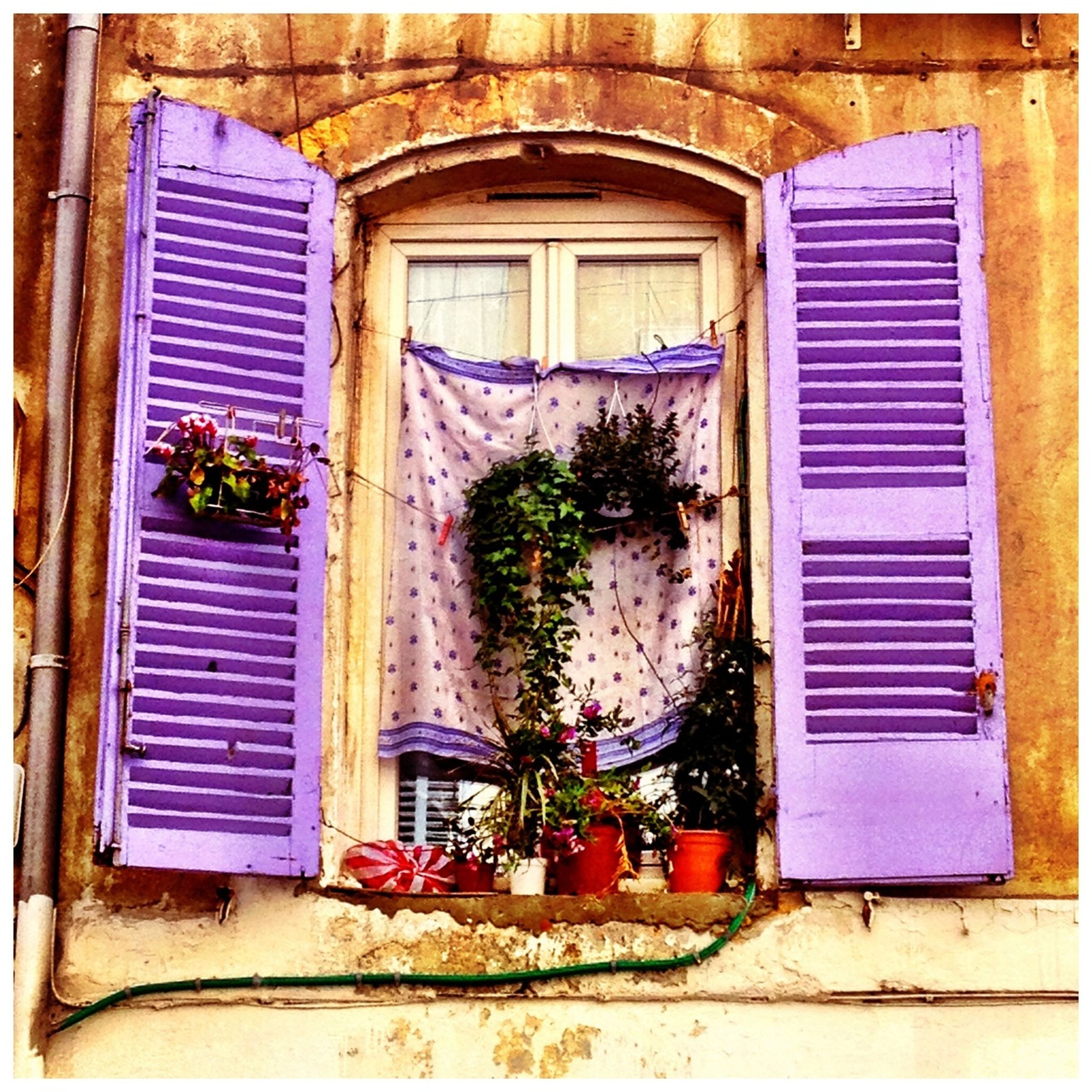 window, building exterior, architecture, built structure, house, plant, growth, potted plant, flower, door, residential structure, closed, blue, window sill, day, residential building, outdoors, low angle view, flower pot, no people