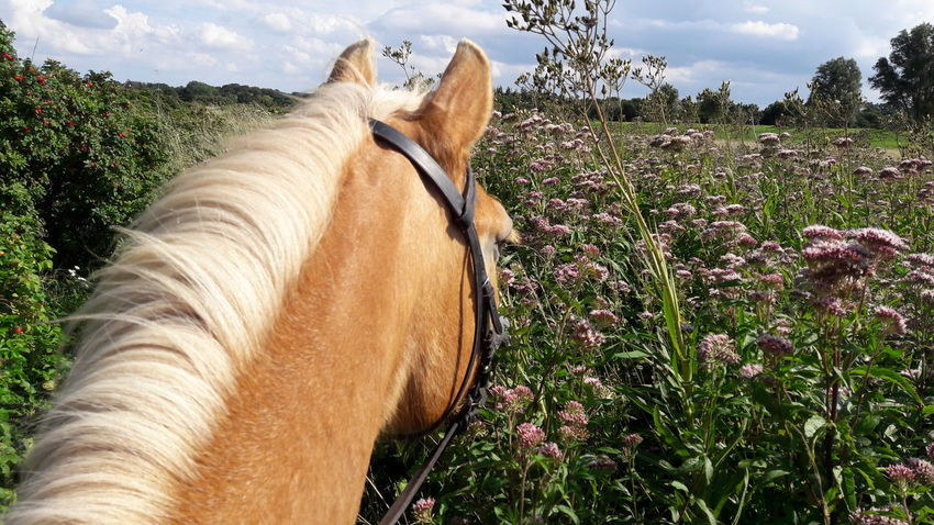Horse Domestic Animals One Animal Cloud - Sky Animal Themes No People Day Mammal Outdoors Sky Tree Nature Grass Landscape Rural Scene Close-up