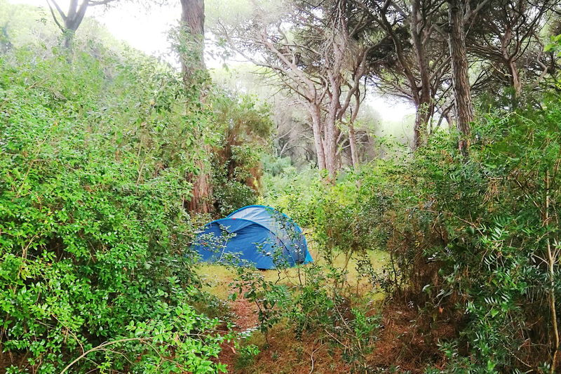 free camping Tent Camping Tree Close-up Grass Green Color Plant