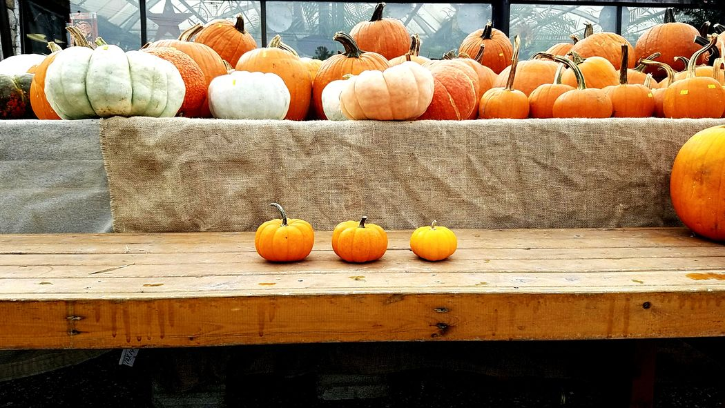 Pumpkin Arrangement Large Group Of Objects No People Vegetable Day Squash - Vegetable Market Pumpkinpatch PumpkinPatch🎃 EyeEmNewHere Colour Your Horizn