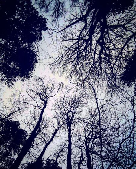 Sadness Tree Sky