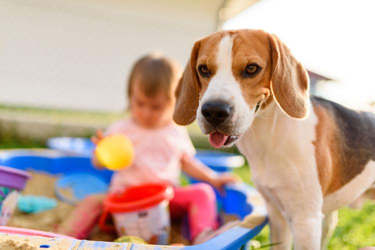 Girl with dog playing at yard