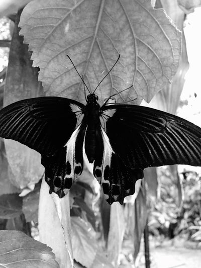 Black And White IPhoneography Blackandwhite Insect One Animal Animal Themes Animals In The Wild Fragility Butterfly - Insect Day Animal Wildlife Nature No People Beauty In Nature Outdoors