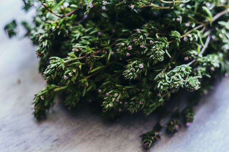 Close-Up Of Thyme Plants On Table
