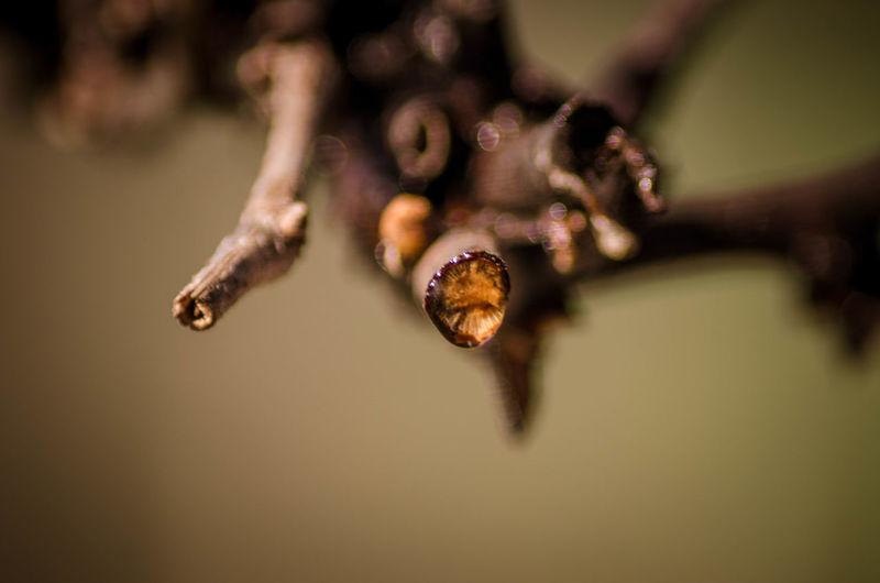 Vine and drop