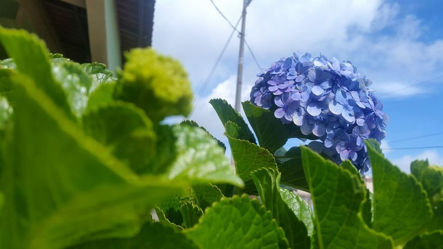 Plant Growth Nature Leaf Flower Green Color Close-up No People Day Outdoors Fragility Beauty In Nature Freshness Sky Greenhouse Blue Blue Sky