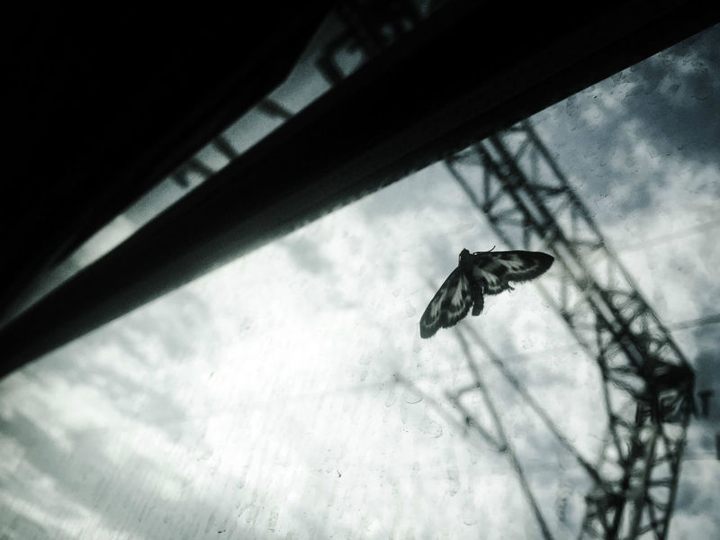 Saw a moth on the window as I was travelling home, thought the pattern of it's wings clashed interestingly with the clouds and dirty window. Animal Bathgate Black And White Closeup Cloud - Sky Dirty Grunge Insect Low Angle View Macro Monochrome Moth My Commute Scotland Silvered Sky Station Towers Train Window Iphone 6 Plus Creepy Industrial Feel The Journey Fine Art Photography