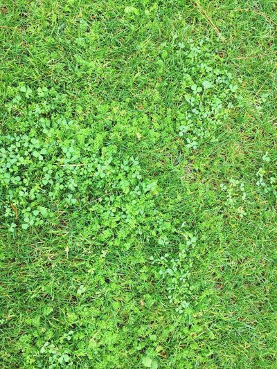 Green Green Color Greenery Grass Backgrounds