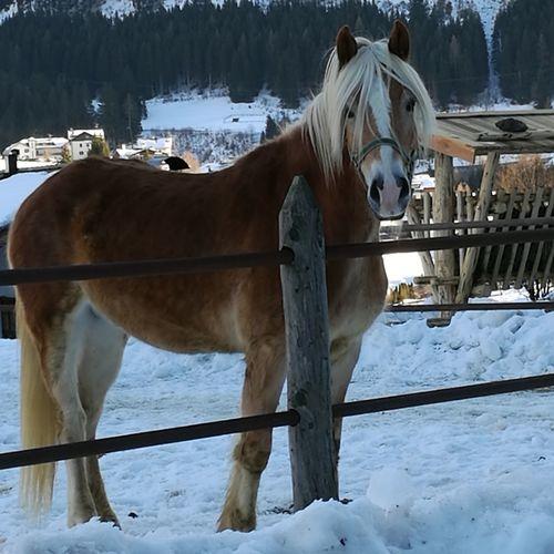 Horse Snow Cold