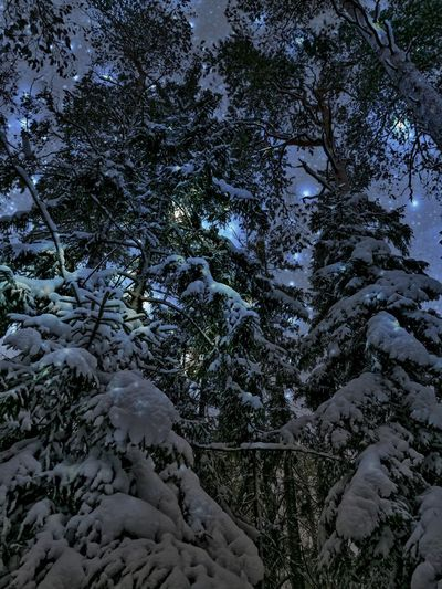 Tree Snow Winter Cold Temperature Nature Beauty In Nature Tranquility No People Scenics Tranquil Scene Growth Outdoors Sky Branch Day Magical Places Travel Destinations Visithelsinki Star - Space Star Starry Sky Stars In The Skies