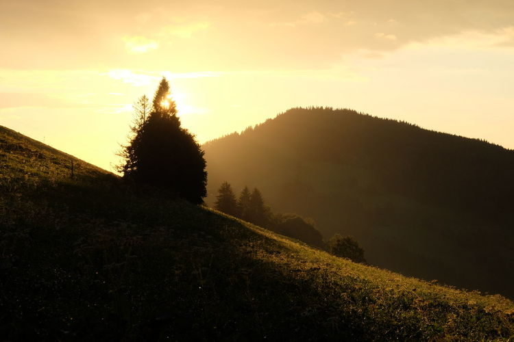 Black Forest Germany Evening Lights Landscape_Collection Schwarzwald Silhouettes Trees Beauty In Nature Conifer  Evening Forest Mountains Landscape Meadows Mountains Nature Outdoors Spruce Trees Sunset Tranquility Tree