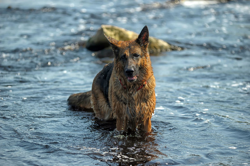 Portrait of dog in the sea