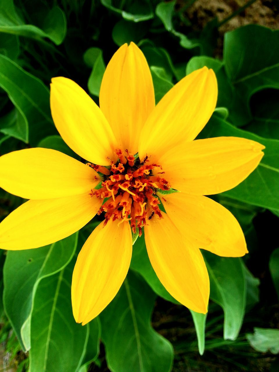 flower, petal, yellow, fragility, flower head, freshness, beauty in nature, nature, growth, plant, blooming, pollen, no people, leaf, outdoors, close-up, day, gazania