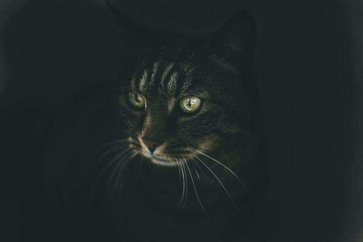 Pets Corner Cat Emotions Nature Animal