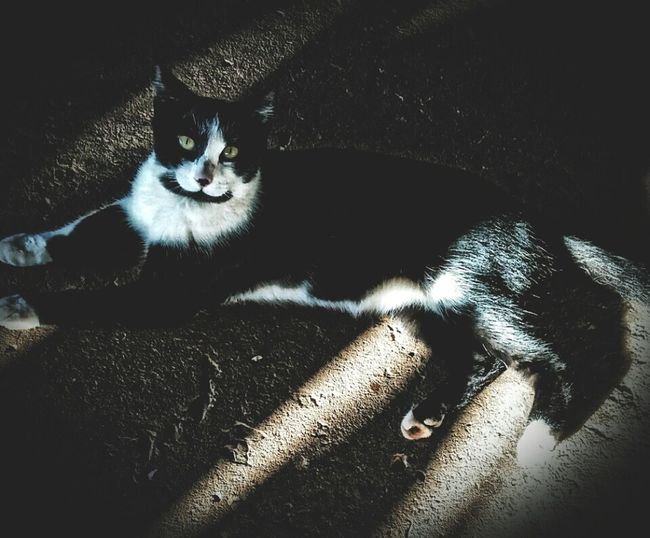 My baby kitty Segurabrazeel Brazil Cat Chanel Meow Rrww Bitc 🐱🐈 First Eyeem Photo