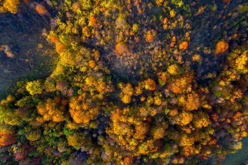 Full frame shot of autumn trees in forest