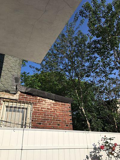 Blue Sky Urban View Tree City Tree