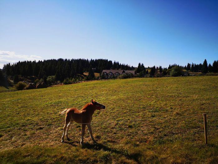 J Field Grass