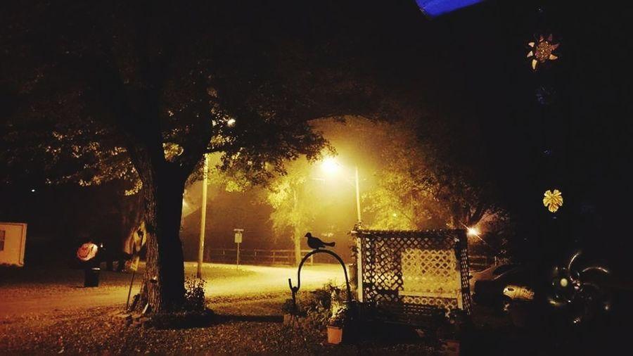 Night Tree Outdoors Park - Man Made Space Illuminated No People Sky