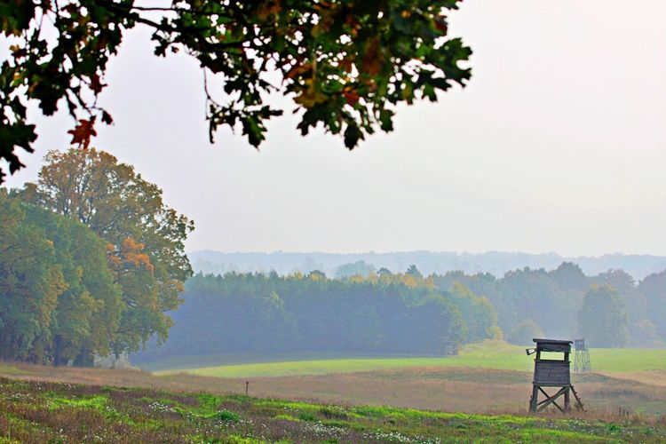 Landscape Nature Tranquil Scene Scenics - Nature Tranquility No People Environment Outdoors Non-urban Scene Idyllic Seat Green Color Field Day