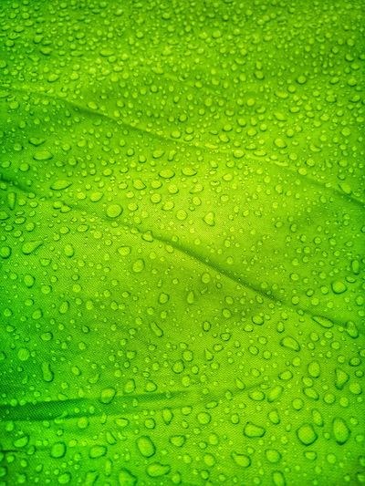 Backgrounds Full Frame Close-up Grass Green Color RainDrop Droplet Wet Rain Drop Rainfall Water Drop Dew Rainy Season Blooming Dripping Torrential Rain Glass Green Background Web Condensation Monsoon