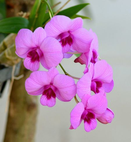 Clouse-up Orchid Flower Orchid Flower Orchids In Bloom Flowers,Plants & Garden Flowers, Nature And Beauty Flowers Of EyeEm Flowers#nature#hangingout#takingphotos#colors#hello World#flora#fauna