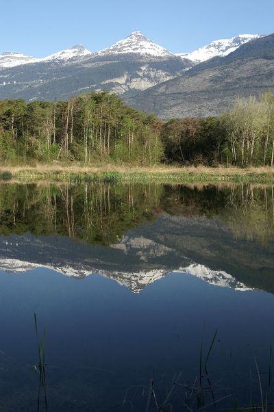 Pfynsee Beauty In Nature Leuk Natur Nature Pfynsee Pfynwald Reflection Schweiz See Spiegelung Switzerland Tranquility Wallis Wasser Water