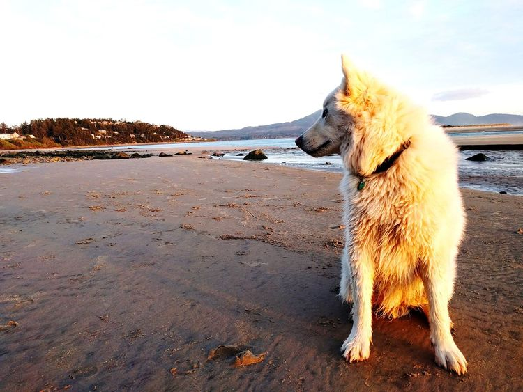 Animal Themes Beach Beauty In Nature Day Dog Domestic Animals Mammal Nature No People One Animal Outdoors Pets Sand Sea Sky Water
