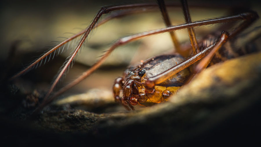 Close-up of spider on rock