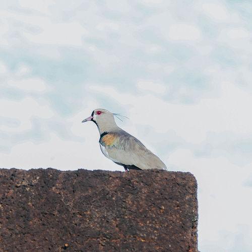 Bird perching on rock against sky