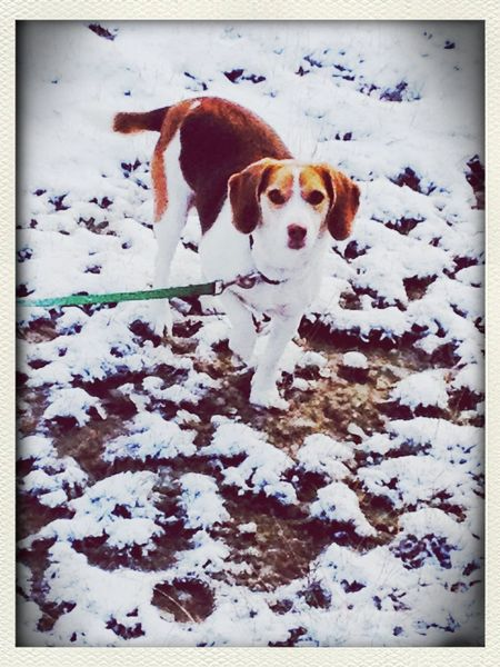 White means snow and my awesome doggy! :D Winter White By CanvasPop