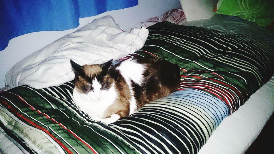 My Cat! Cute Pets Cat Relaxing