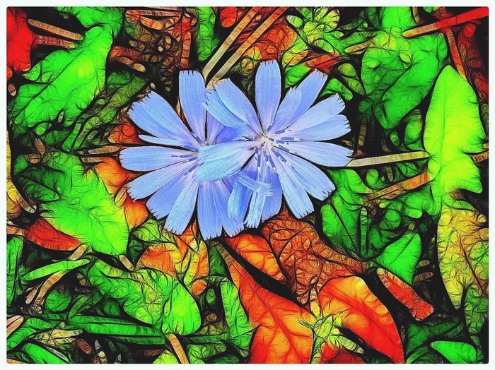 Wildflower fantasy Blue Asters Flowers Outdoors Forrest floor Nature closeup Surreal bizarre Unconventional creative Art