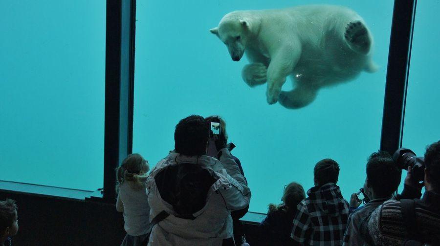 People Looking At Polar Bear At Diergaarde Blijdorp