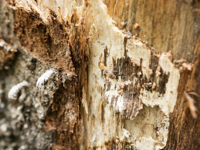 Dry-wood