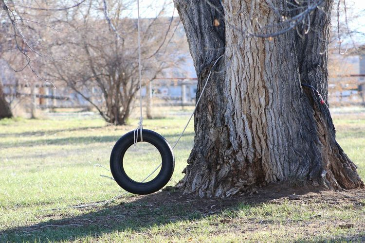 Tire Swing Cottonwood Trees Morning Memories Of Summer