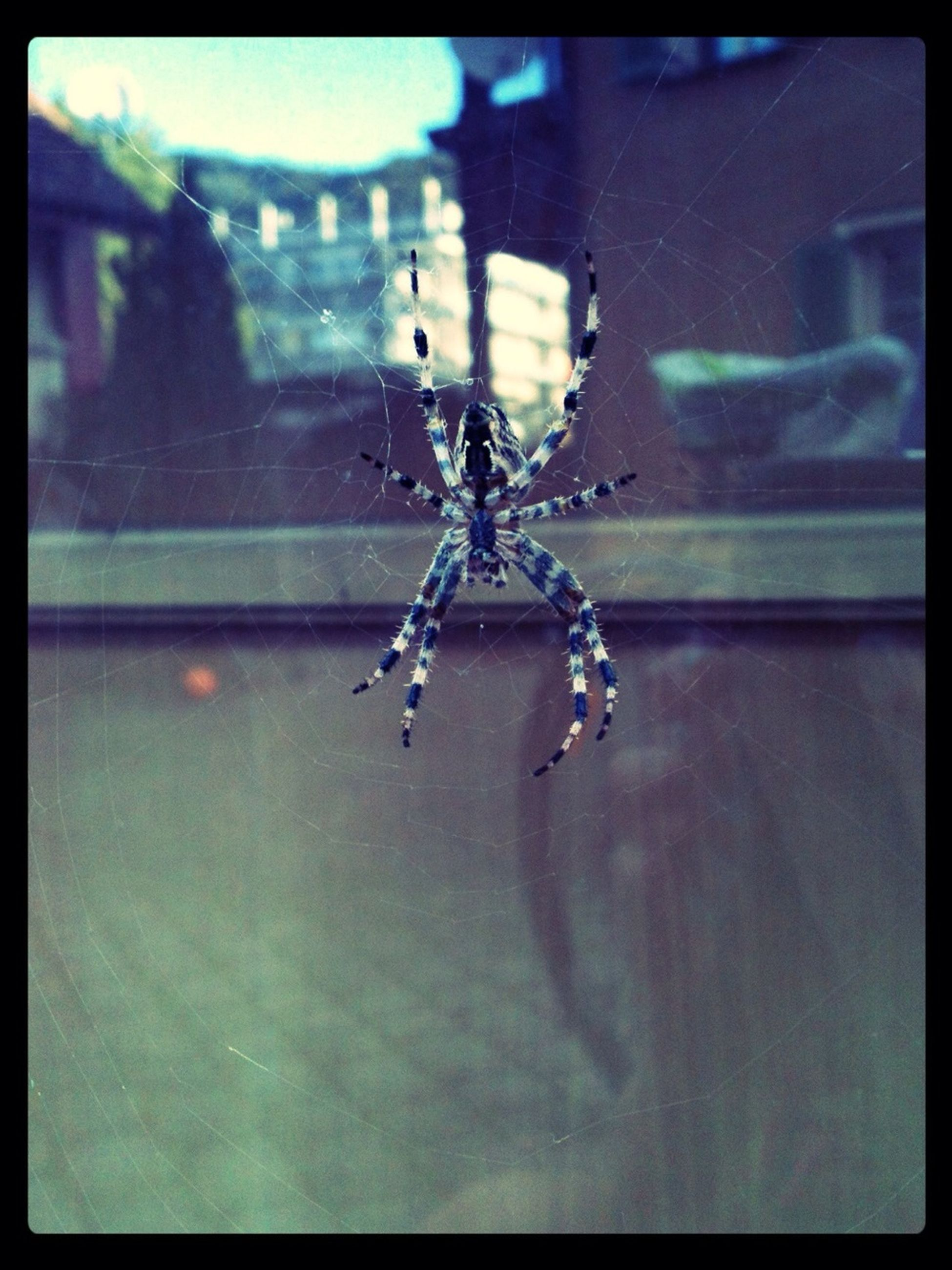 transfer print, water, auto post production filter, mode of transport, indoors, transportation, spider, animal themes, reflection, one animal, glass - material, illuminated, transparent, insect, animals in the wild, wildlife, waterfront, motion, window, no people