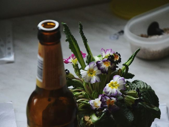 Flower Bottle Nature Close-up Aromatherapy Oil Scented Table Flower Head No People Beauty In Nature Freshness Bouquet Day