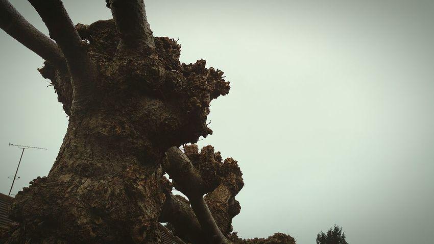 Tree Pruned Cut Chopped