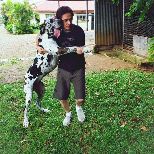 Clases de Tango Great Dane My Dog Mi Perro