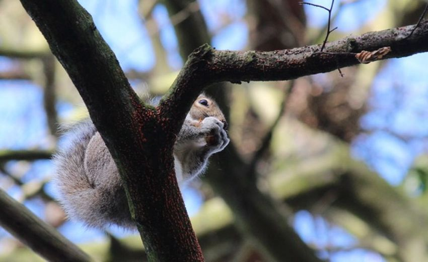 Squirrel Tree Branch Animal Animal Themes Animal Wildlife One Animal Mammal
