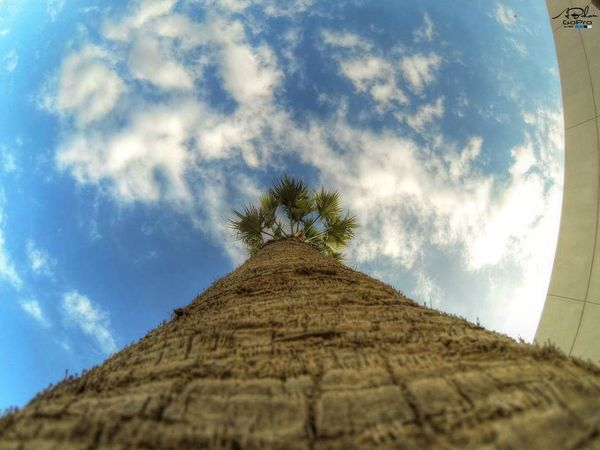 Nature Beauty In Nature Sky Tree Gopro Goprohero3 Goprophotography Gopro3 GoPrography GoProHero3+BlackEdition goprolibya Libya Goprolibya