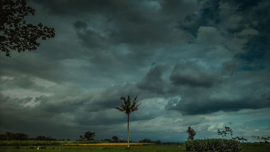 Tree Storm Cloud Thunderstorm Lightning Sky Landscape Cloud - Sky Forked Lightning Torrential Rain Power In Nature Hurricane - Storm Meteorology Extreme Weather Dramatic Sky Cumulonimbus Tornado Cyclone Storm Overcast
